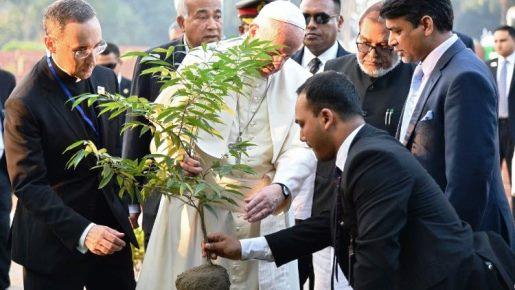 Papa Francisco: tratar o meio ambiente com ternura